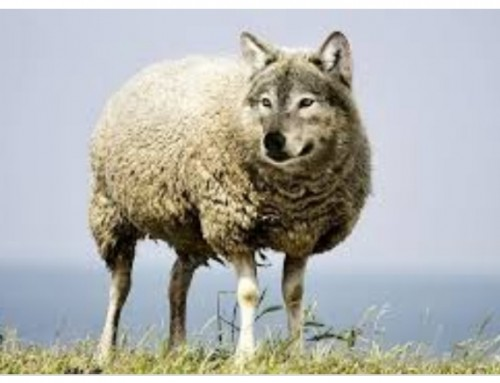 Beware!! WOLVES IN SHEEPSKIN!!Fake news! False teachers, liars, Scams and traps.